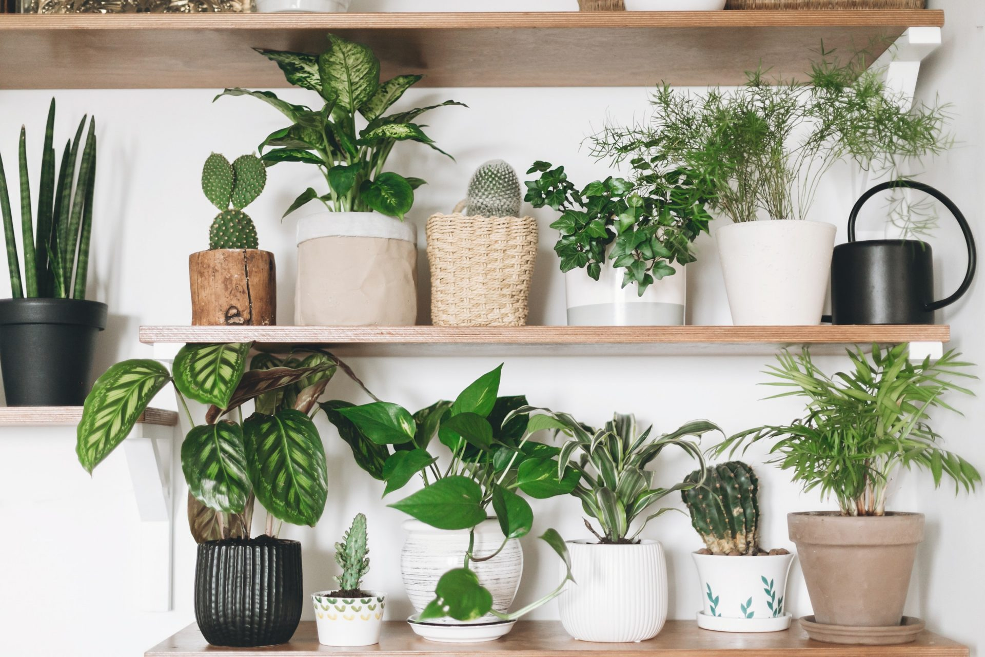 Quiz: Can you name the houseplant?