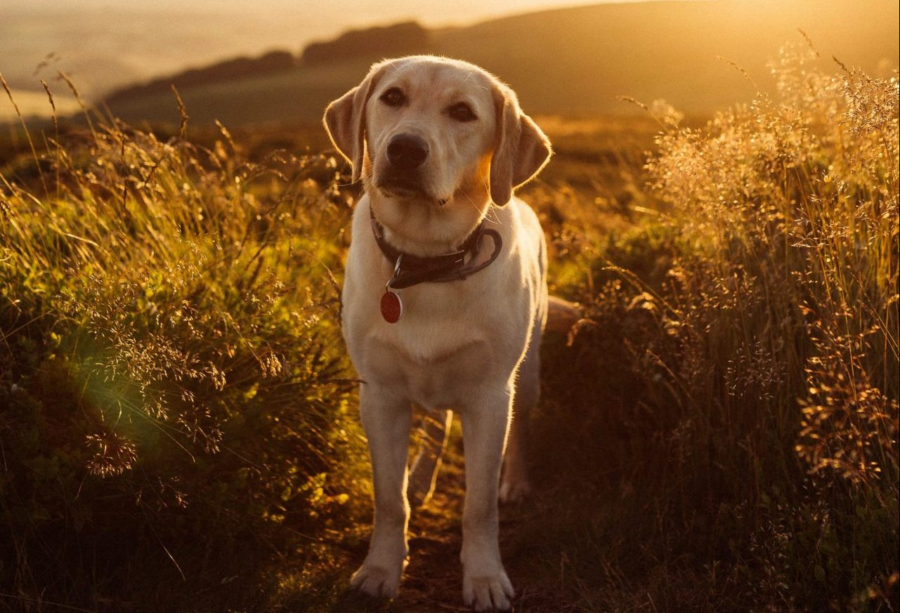 places to walk your dog in taunton